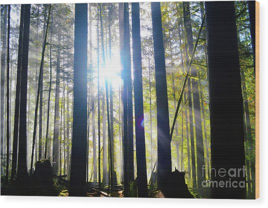 Forest Light Rays Wood Print