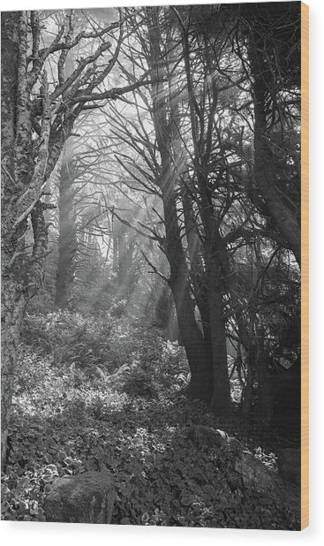 Forest Morning Wood Print by HW Kateley