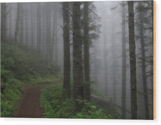 Forest Of Fog Wood Print