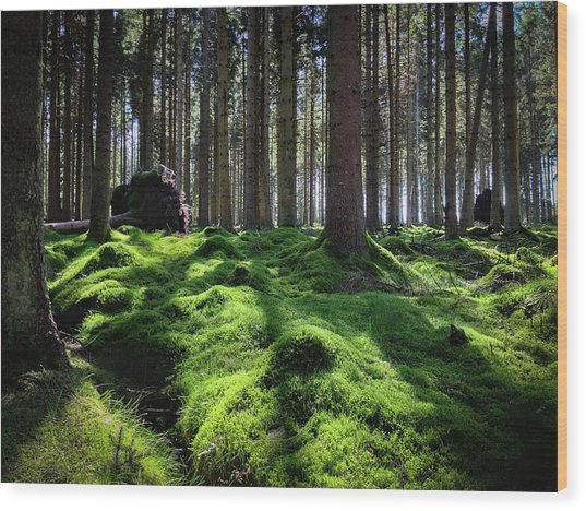 Forest Of Verdacy Wood Print