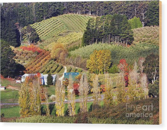 Forest Range, Adelaide Hills Wood Print