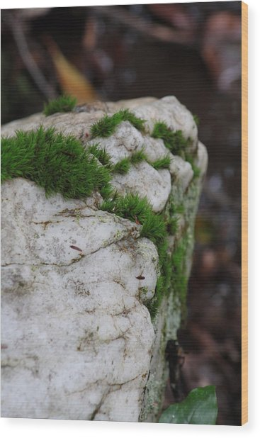 Forest Rock With Moss Wood Print by Pamela Smith