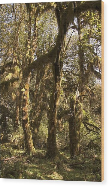 Forest Setting In Hoh Rain Forest Wood Print