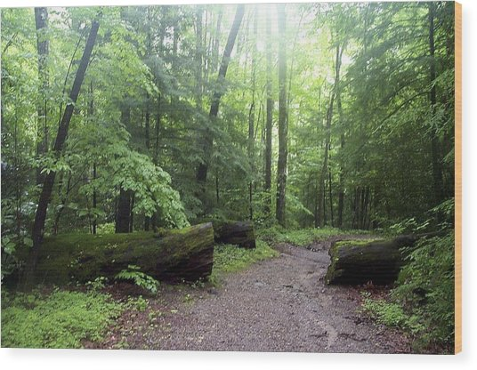 Forest Setting Smoky Mountains National Park Wood Print