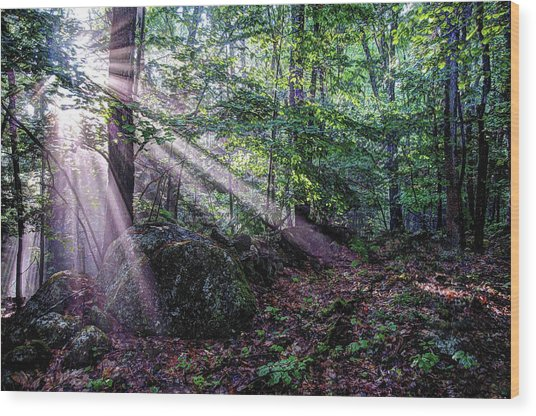 Forest Sunbeams Wood Print
