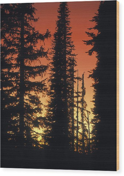 Forest Sunset Wood Print by Leland D Howard
