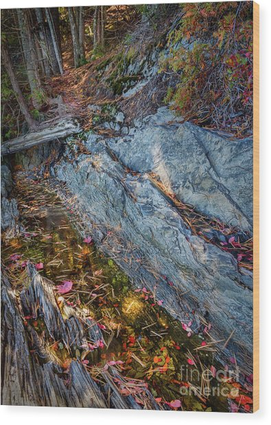 Forest Tidal Pool In Granite, Harpswell, Maine  -100436-100438 Wood Print