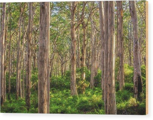 Forest Twilight, Boranup Forest Wood Print