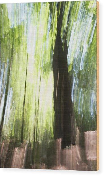 Forest Walk #2 Wood Print by Linda Bickerton-Ross