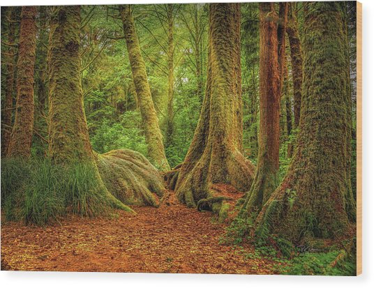 Forest Walk Wood Print