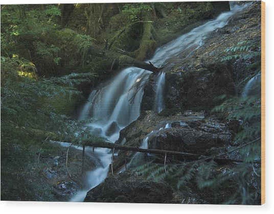 Forest Waterfall. Wood Print