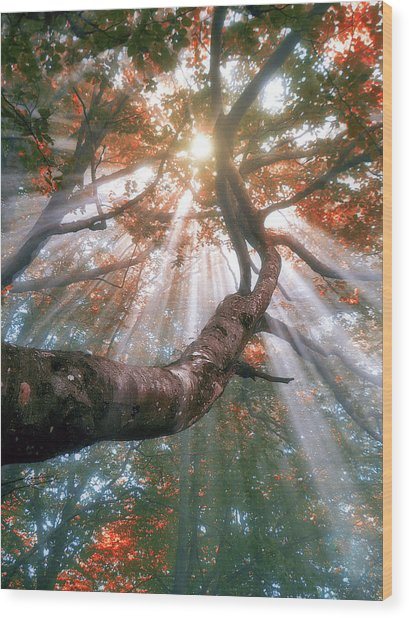 Forest With Fog And Sun Rays Wood Print