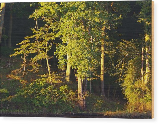 Forests Edge Wood Print