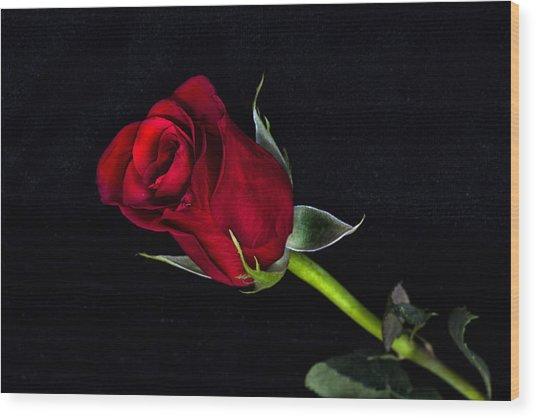 Forever Lasting Rose  Wood Print