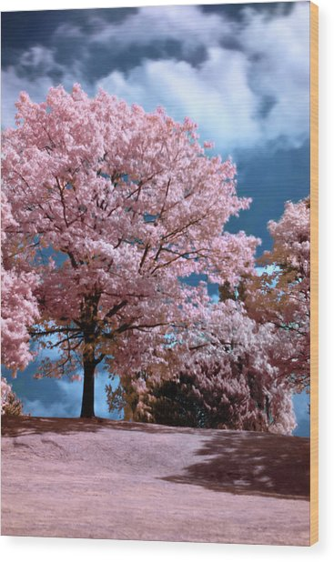 Wood Print featuring the photograph Forever Spring by Helga Novelli