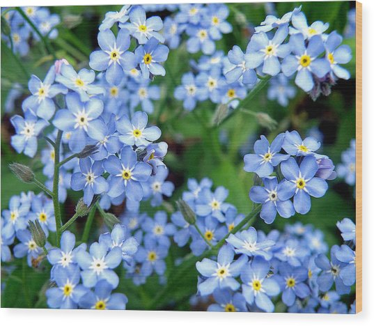 Forget-me-nots Wood Print