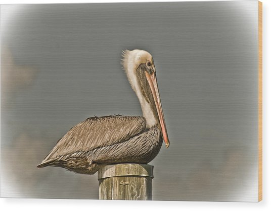 Fort Pierce Pelican Wood Print