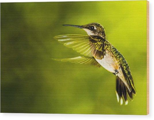 Forward Stroke - Hummingbird Wood Print