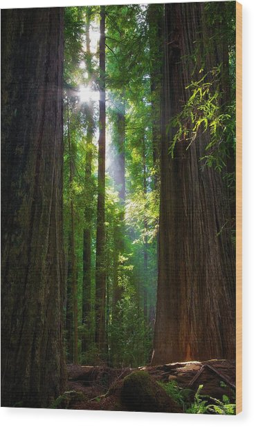Founders Tree Sunset Wood Print