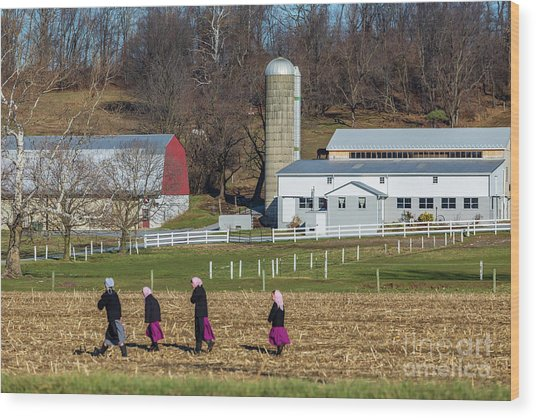 Four Amish Women In Field Wood Print