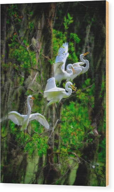 Wood Print featuring the photograph Four Egrets by Harry Spitz