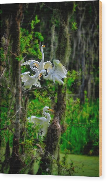 Wood Print featuring the photograph Four Egrets In Tree by Harry Spitz