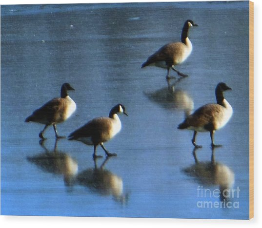 Four Geese Walking On Ice Wood Print