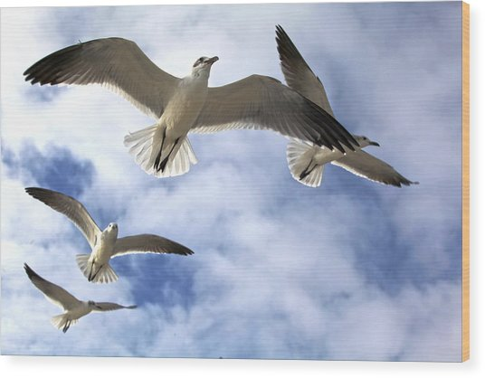 Four Gulls Wood Print