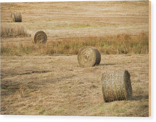 Four Hay Balls -  Wood Print