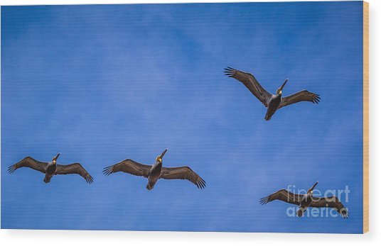 Four Pelicans Wood Print