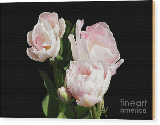 Four Pink Tulips And A Bud On Black Wood Print