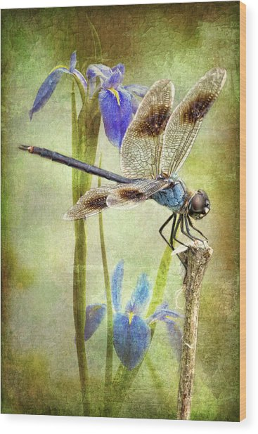 Four Spotted Pennant And Louisiana Irises Wood Print