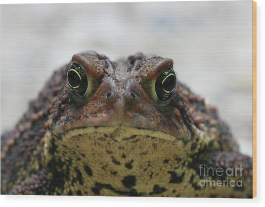 Fowler's Toad #3 Wood Print