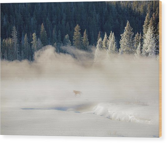 Fox In The Mist // Yellowstone National Park  Wood Print