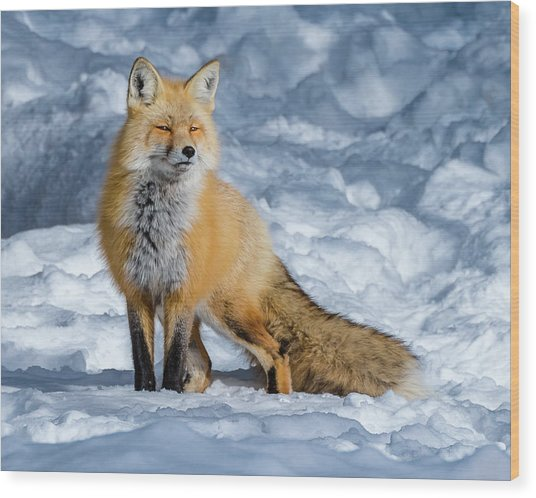 Fox On A Winter Afternoon Wood Print