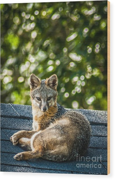 Fox On Roof Wood Print
