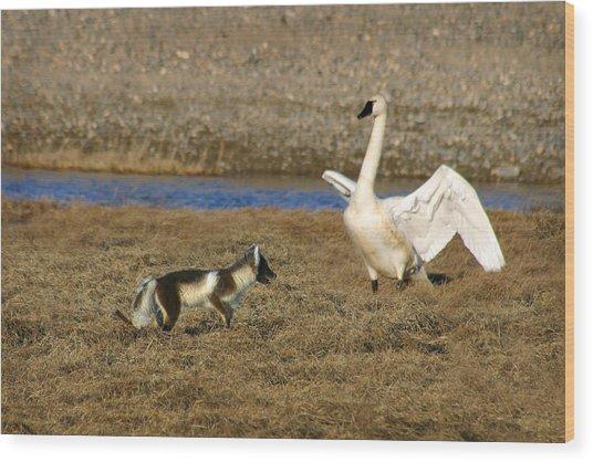 Fox Vs Swan Wood Print