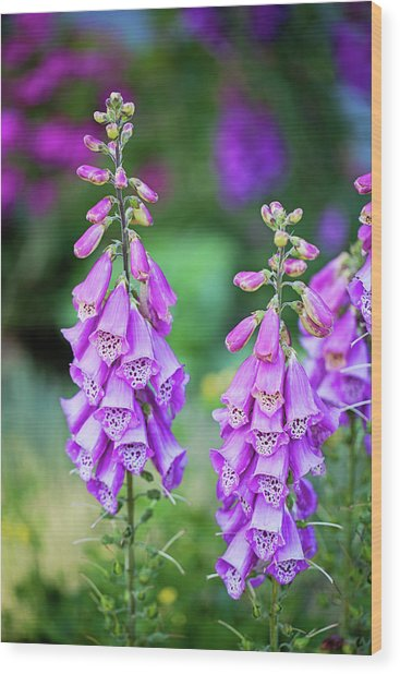 Foxglove Blooms Wood Print