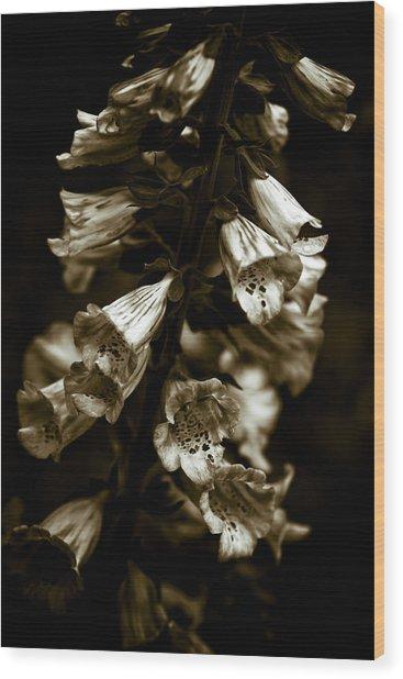 Foxglove Flowers Wood Print by Frank Tschakert