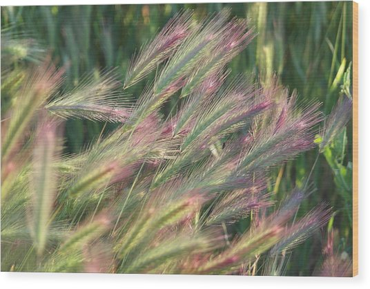 Foxtails In Spring Wood Print