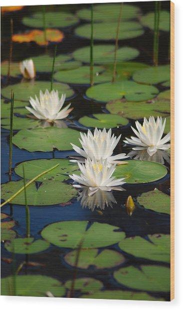 Fragrant Water Lily Wood Print by Christine Savino