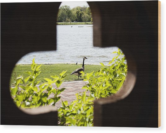 Framed Nature Wood Print