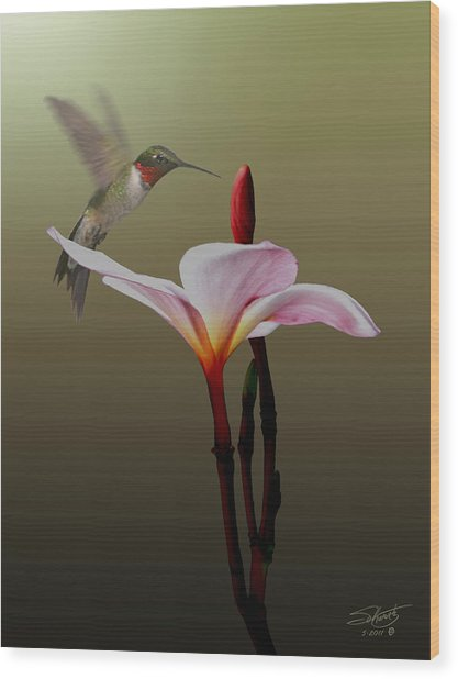 Frangipani Flower And Hummingbird Wood Print