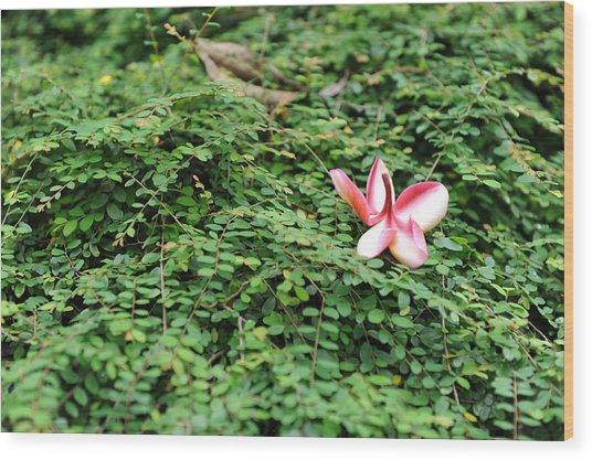 Frangipani Flower Wood Print by Jessica Rose