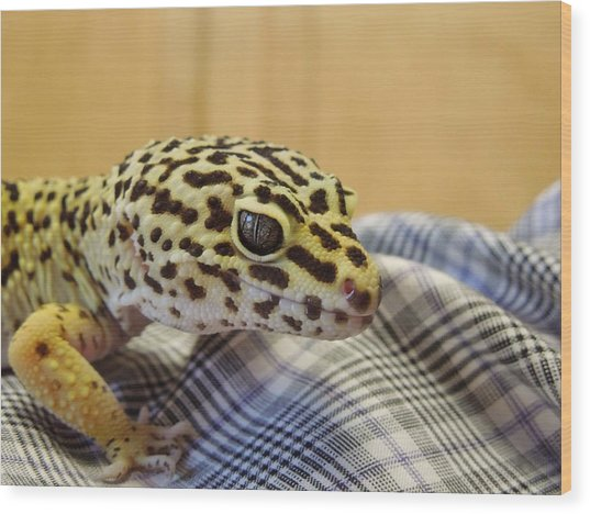 Freckles The Leopard Spotted Gecko Wood Print