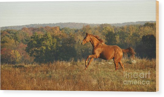 Freedom In The Late Afternoon Wood Print