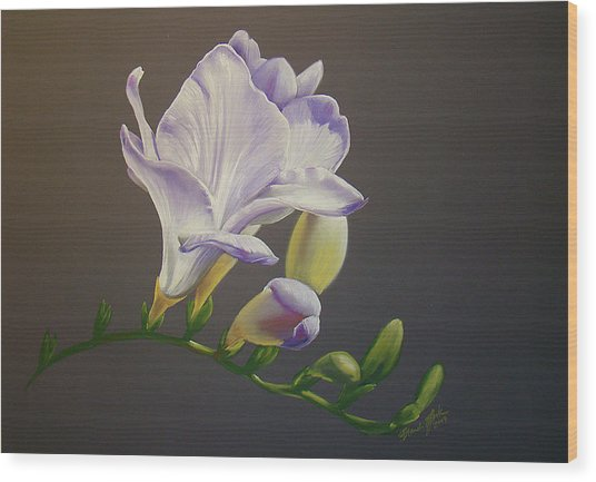 Freesia 1 Wood Print by Brandi York