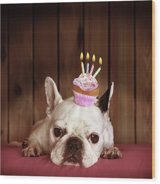French Bulldog With Birthday Cupcake Wood Print