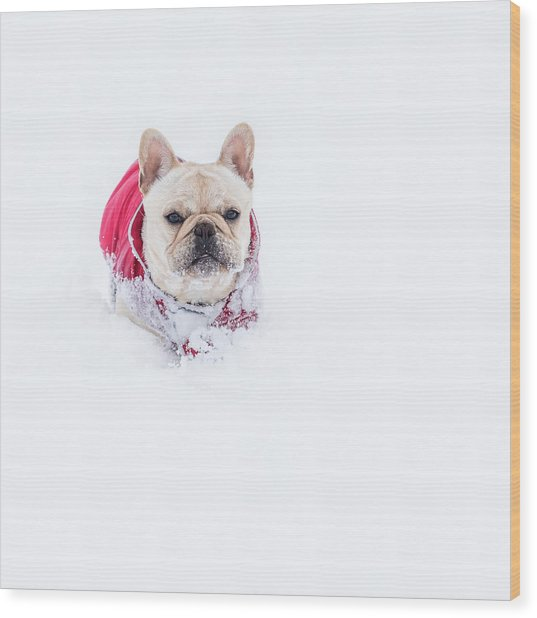 Frenchie In The Snow Wood Print