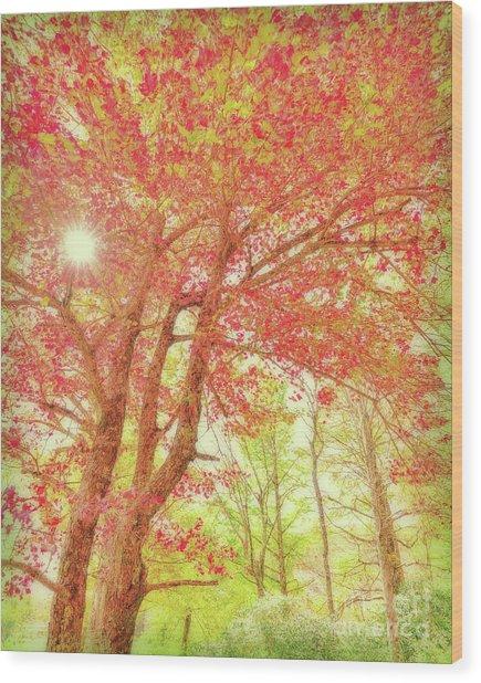 Fresh Morning Wood Print